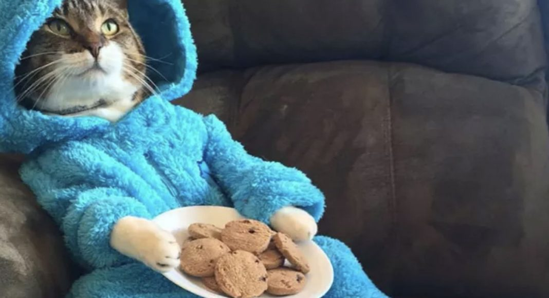 The Cookie Monster cat email.