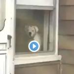 DOG VIRAL